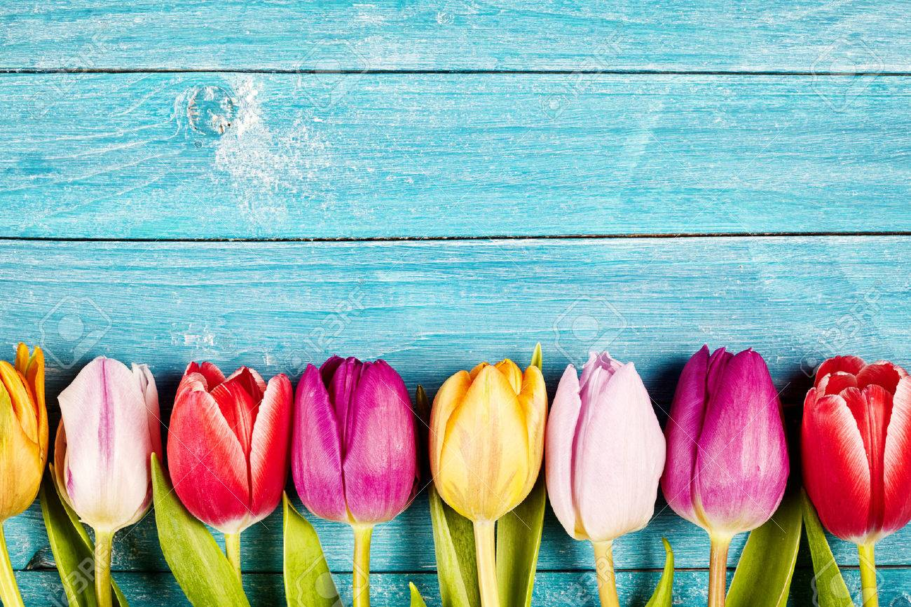 Colorful fresh tulips aligned on a rustic wooden surface made of horizontal boards painted with blue - 53497604