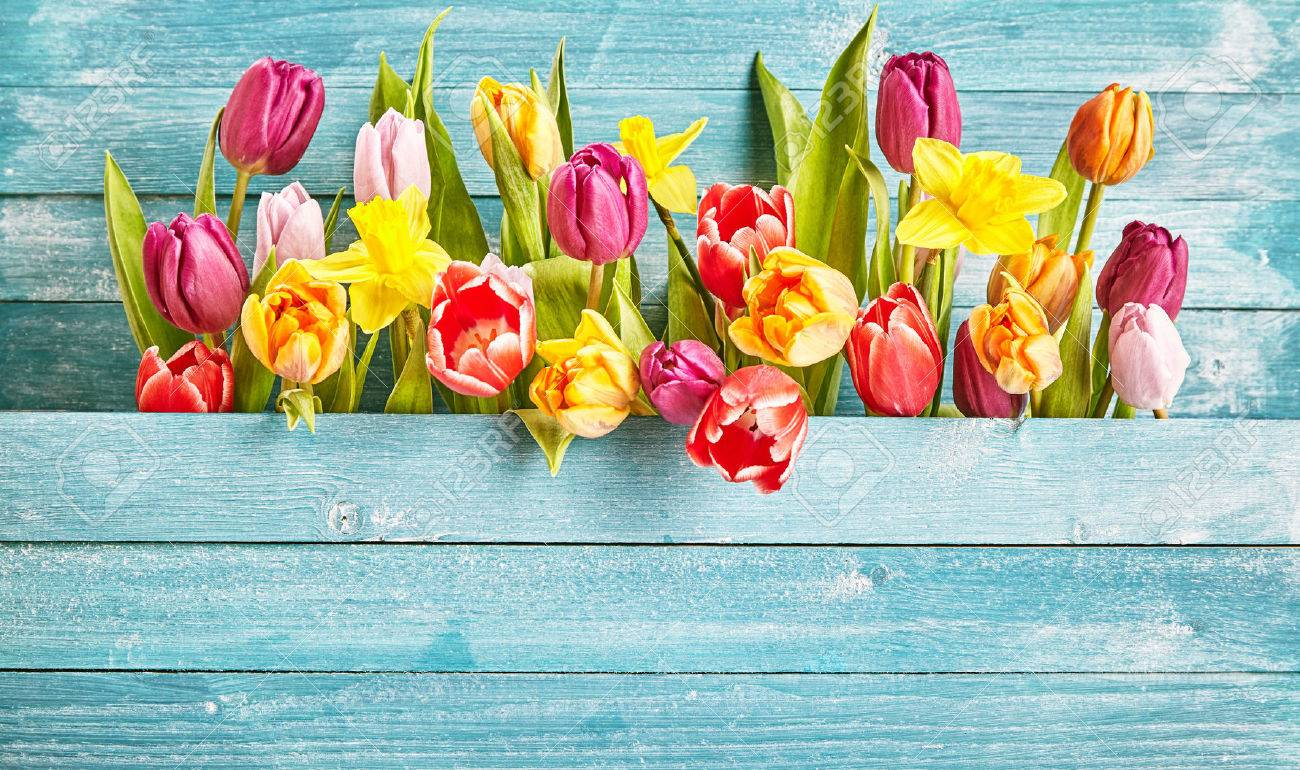 Tulip border with copy space on turquoise wooden background plate for design concepts in seasonal spring time. - 53508549