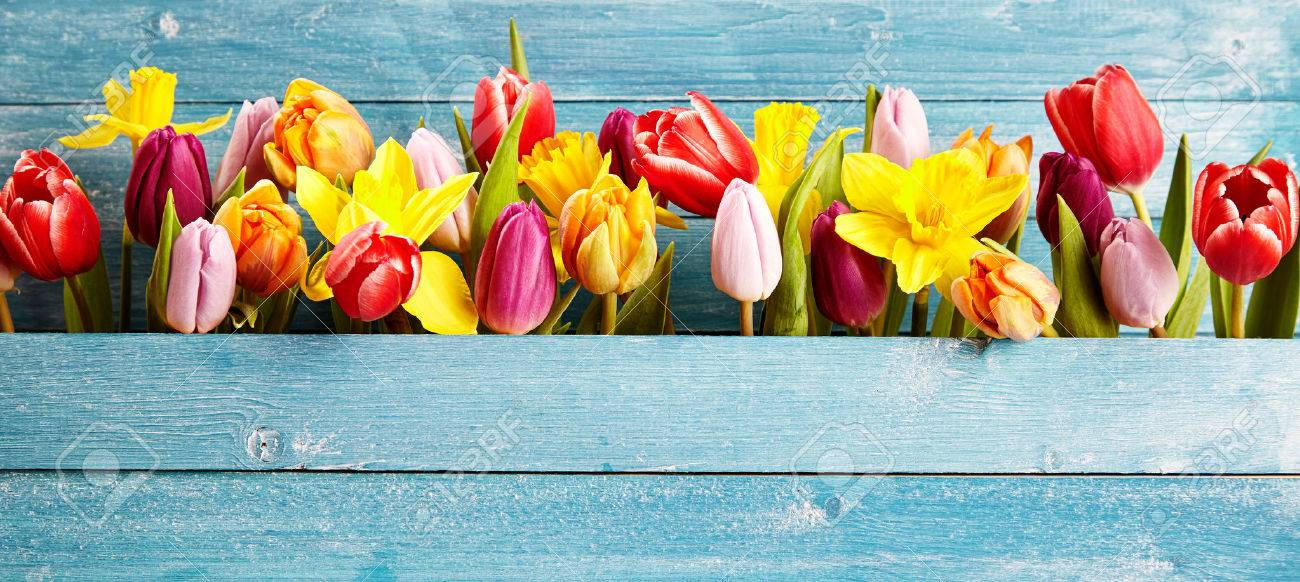 Colorful Arrangement Of Fresh Spring Flowers With Tulips And Stock