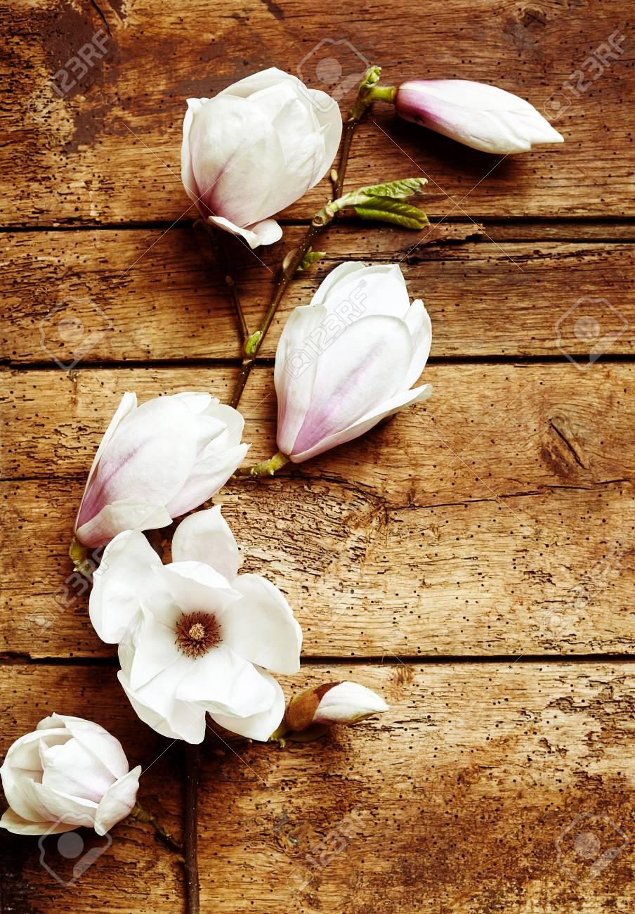 Spray Of Fresh Magnolia Flowers Symbolic Of Spring On Grungy Stock