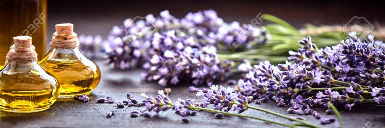 Panoramic Banner Or Header Of Fresh Purple Lavender With Flacons Stock Photo Picture And Royalty Free Image Image 82316765