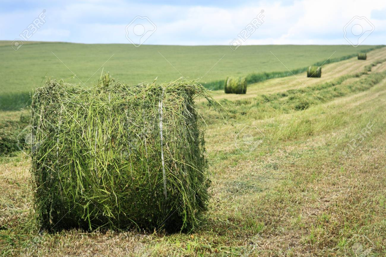 Rural landscape with hay bales Stock Photo - 5109954