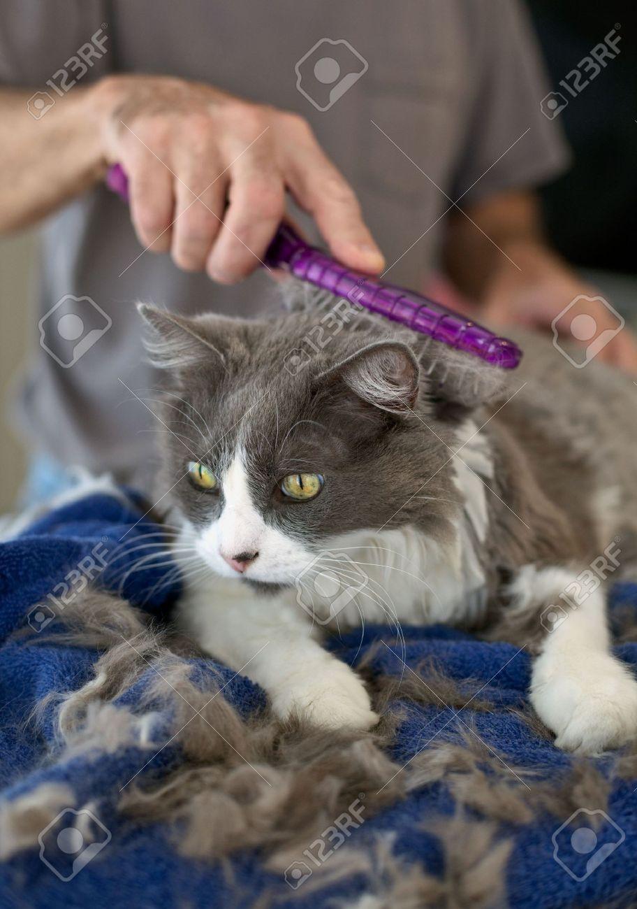 Как сделать так чтобы кошка не линяла