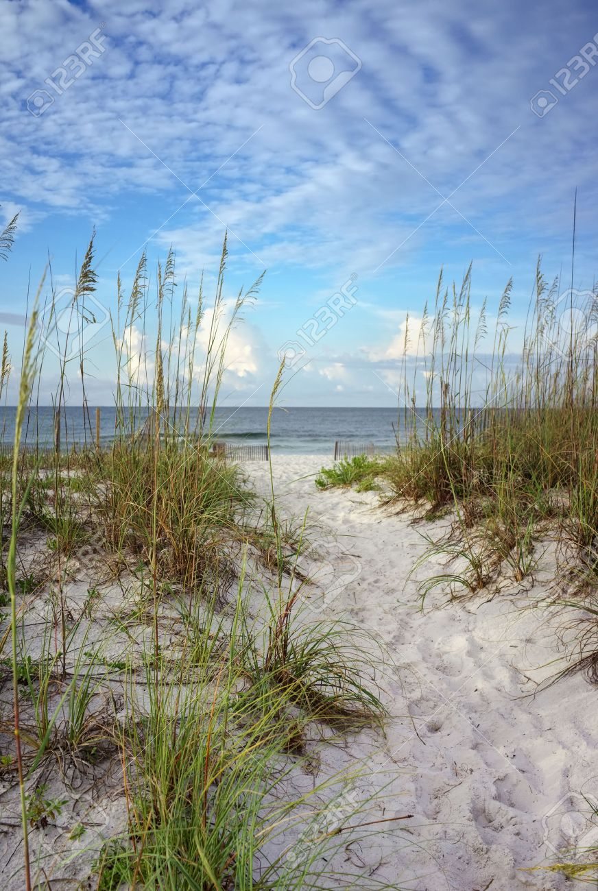 Beach path through white sand dunes and sea oats leads to calm ocean on a summer morning - 24209243
