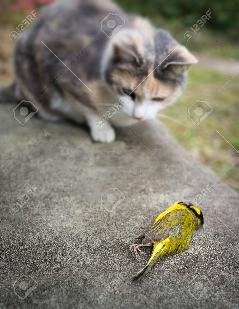 三毛猫ねこネコ猫とその餌食、黄...