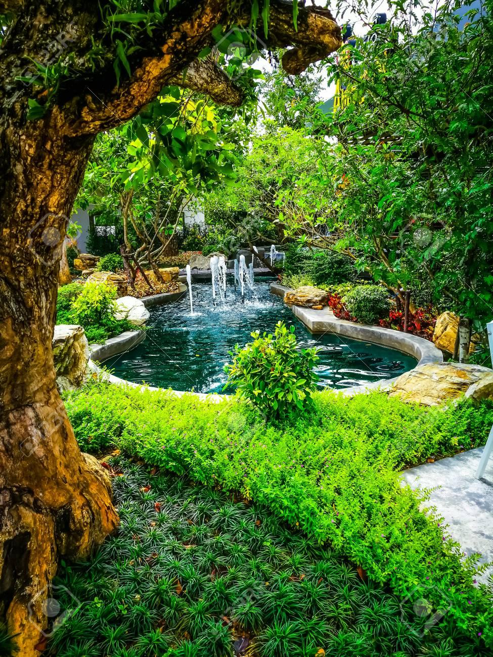 Grüne Tropische Pflanze Kleiner Garten Schmücken Lizenzfreie Fotos ...