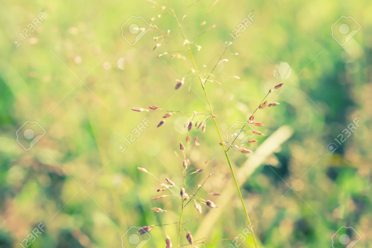 Small Violet Grass Flower Blooming Nature Relax Wallpaper Background