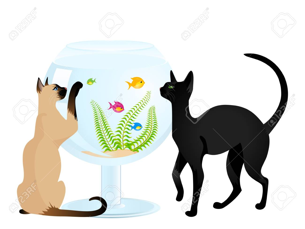 The cat plays with a small fish in an aquarium a white background Stock Photo - 5590352