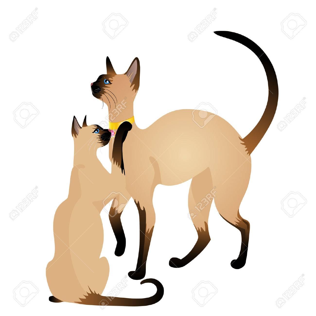 Beautiful Siamese cat Stock Vector - 7048607