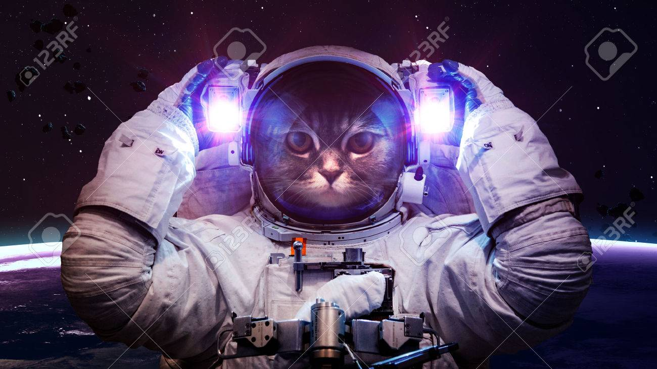 Beautiful cat in outer space. - 48214914