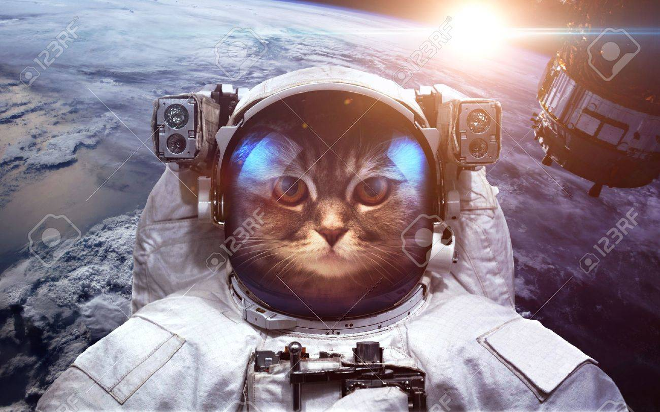 Astronaut cat in outer space against the backdrop of the planet earth - 52306132