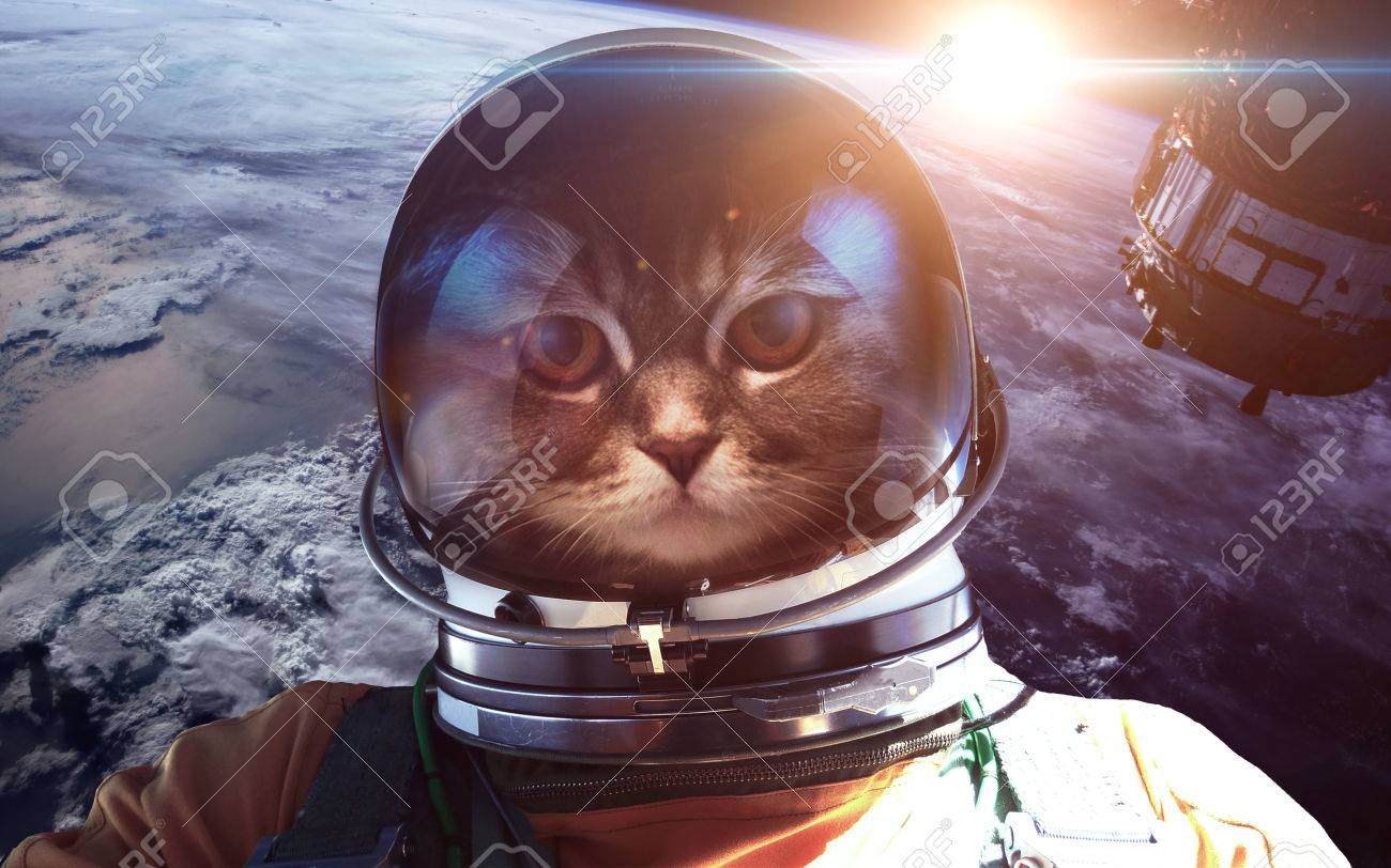 52306112-astronaut-cat-in-outer-space-ag