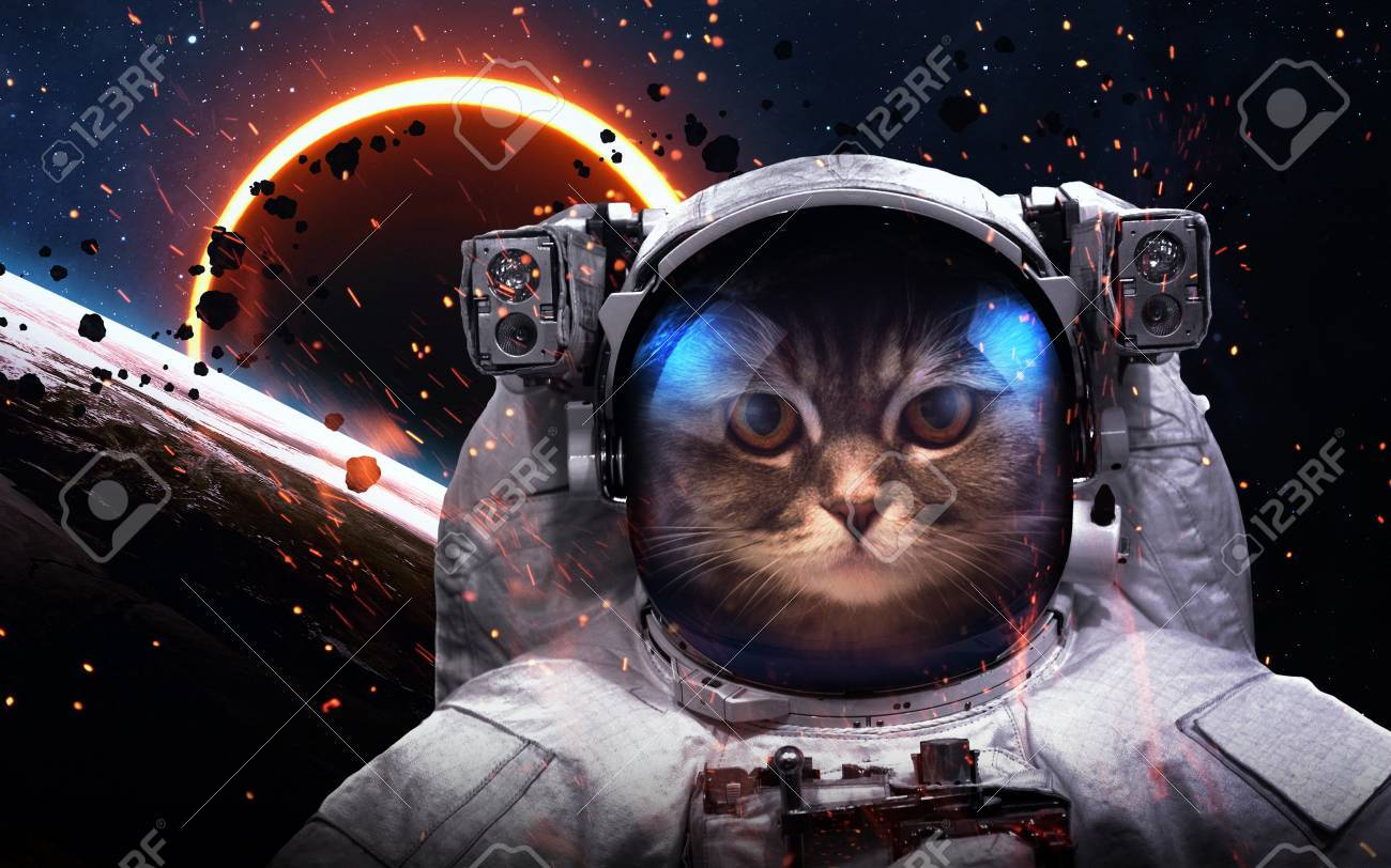 Brave cat astronaut at the spacewalk. This image elements furnished by NASA - 54161040