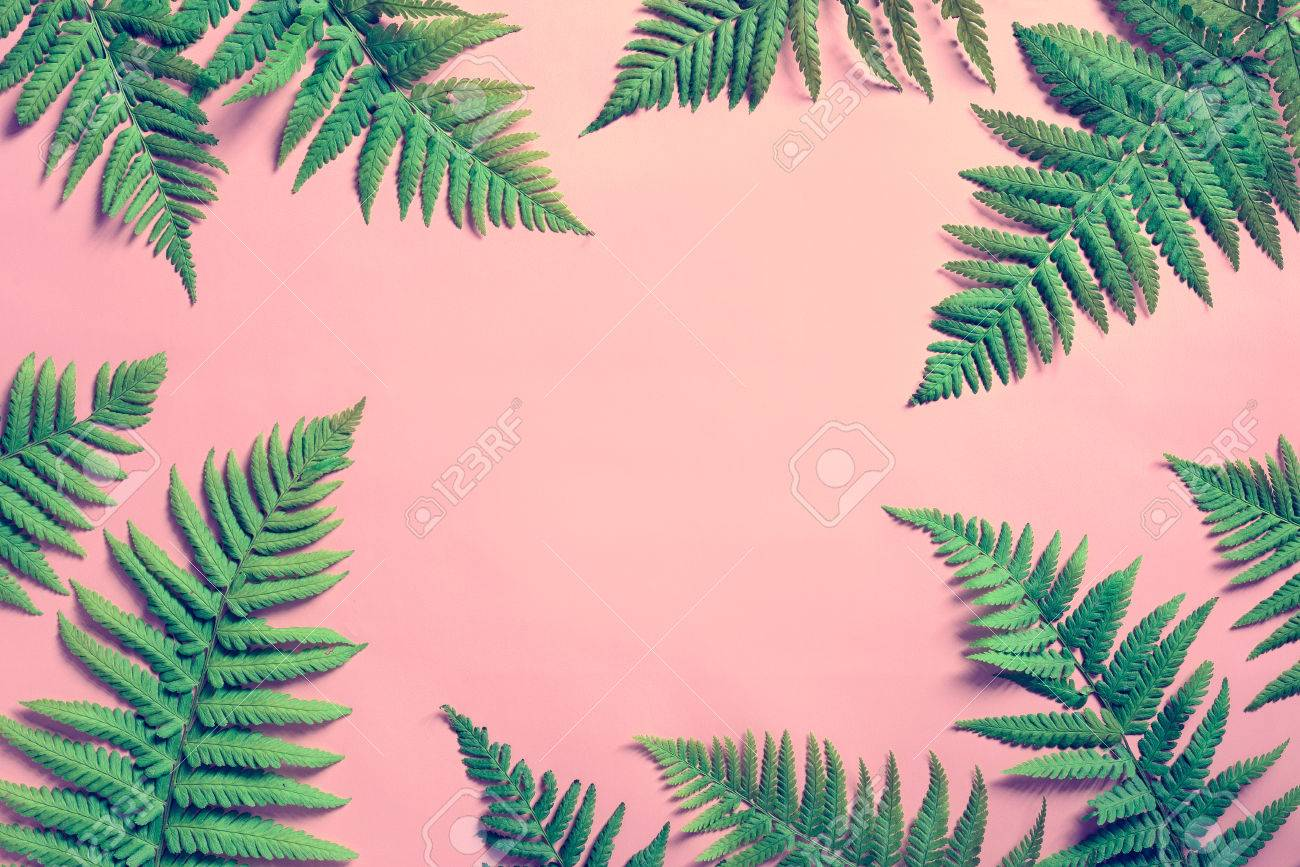 tropical summer background fern leaves set in the frame around