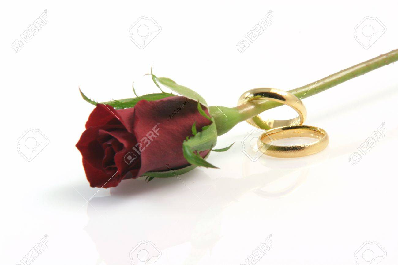 two wedding rings isolated on white with a red rose and a little reflection - 2207731