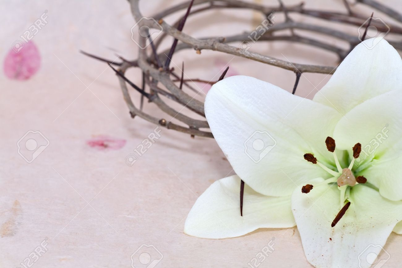 Crown of Thorns and Easter white Lily on  Beige background Stock Photo - 12036306