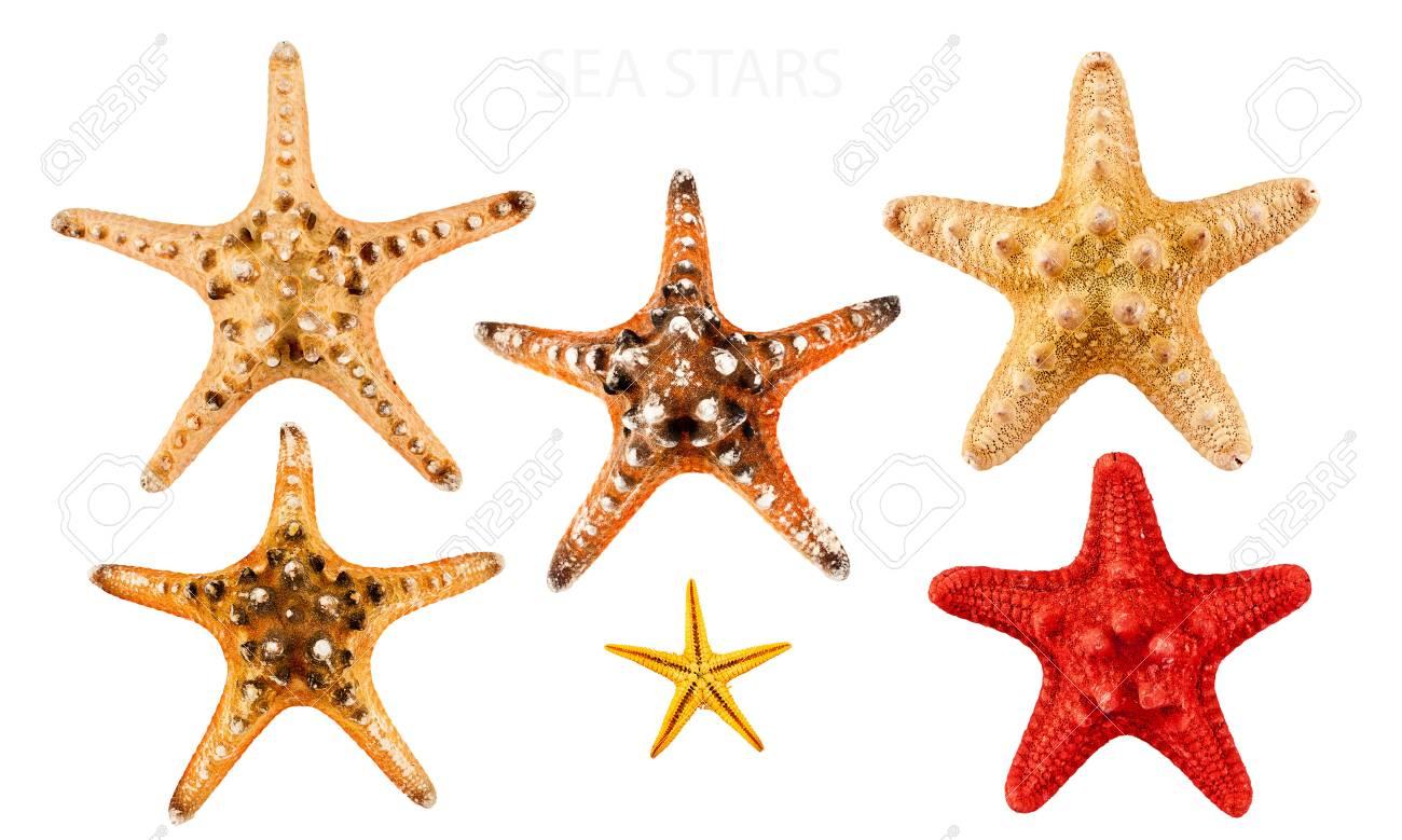 Big set of sea stars, isolated on white. Stock Photo - 14077713