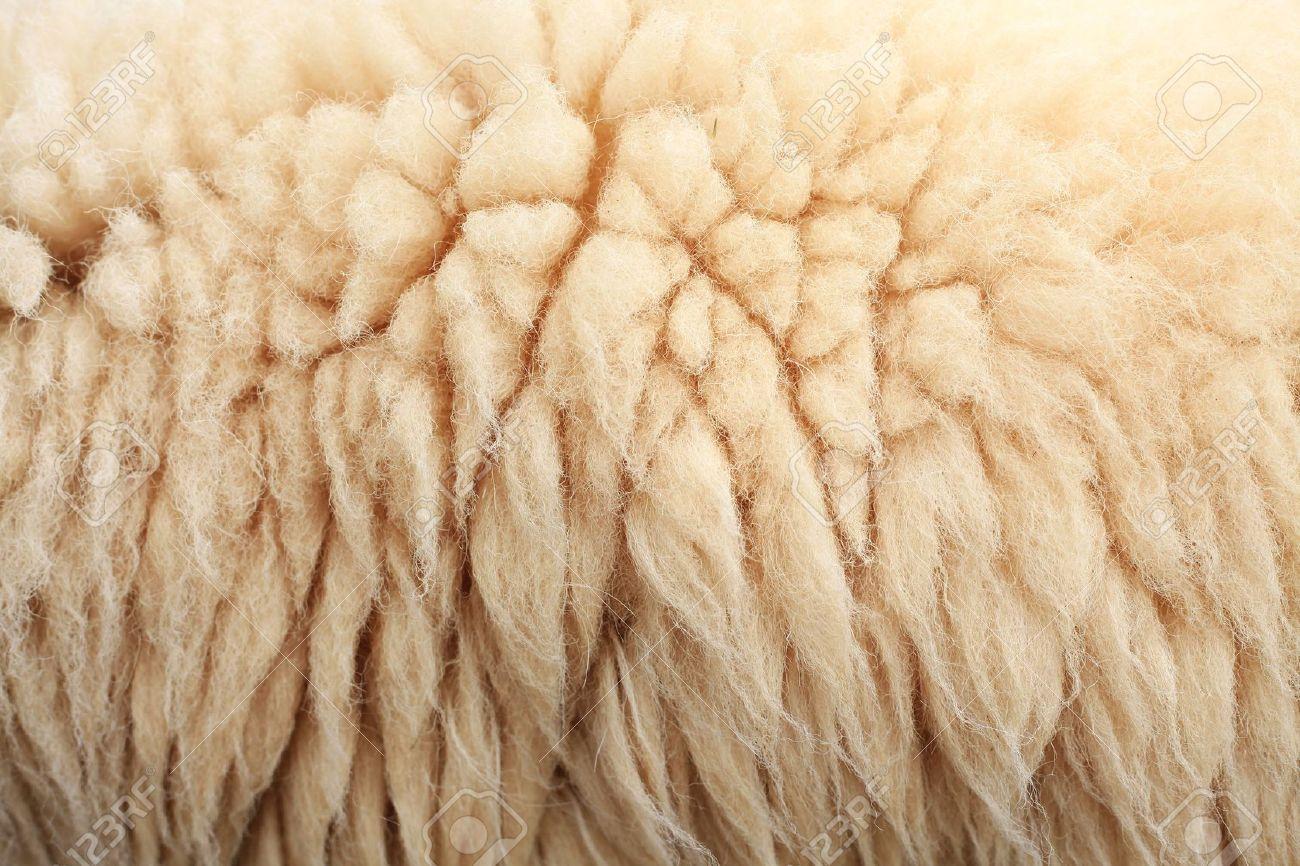 Sheepskin Background Stock Photo - 8253981
