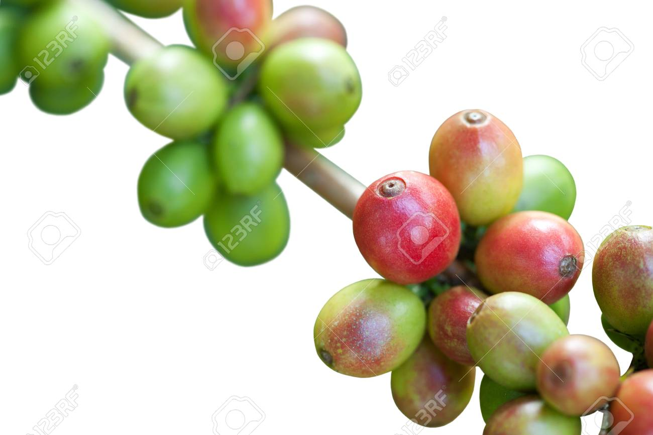 Coffee beans on white Stock Photo - 8451079