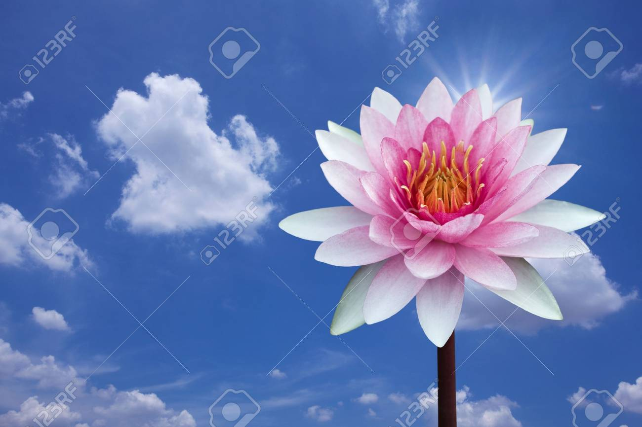 Red lotus on spring background Stock Photo - 9535821