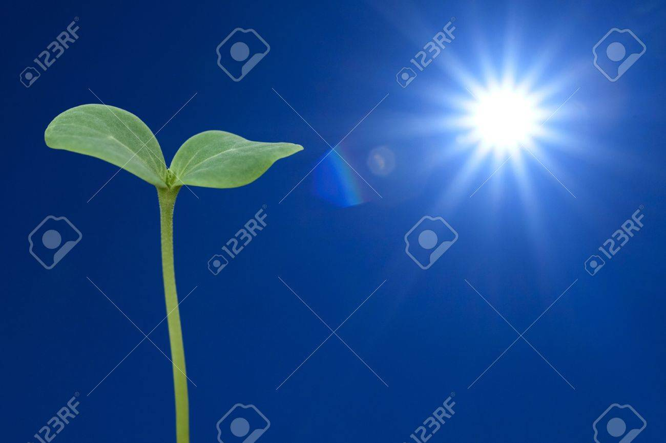 The sun and seedling watermelon Stock Photo - 9576430