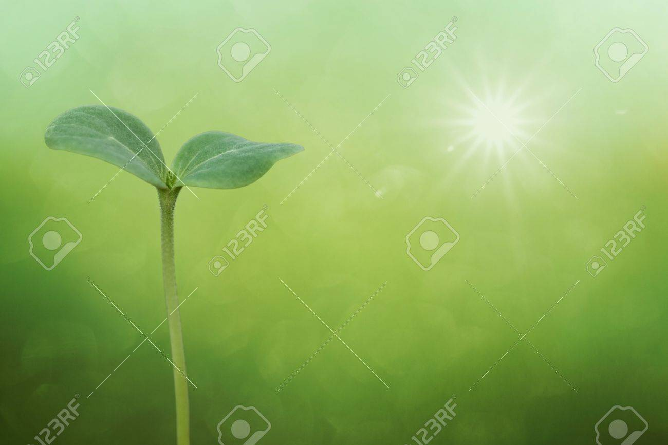 Tree seedling on spring background Stock Photo - 9628970