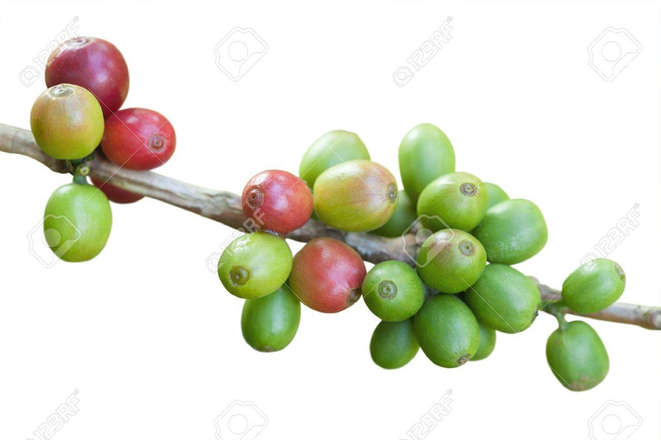 Coffee beans isolated on white Stock Photo - 9667876