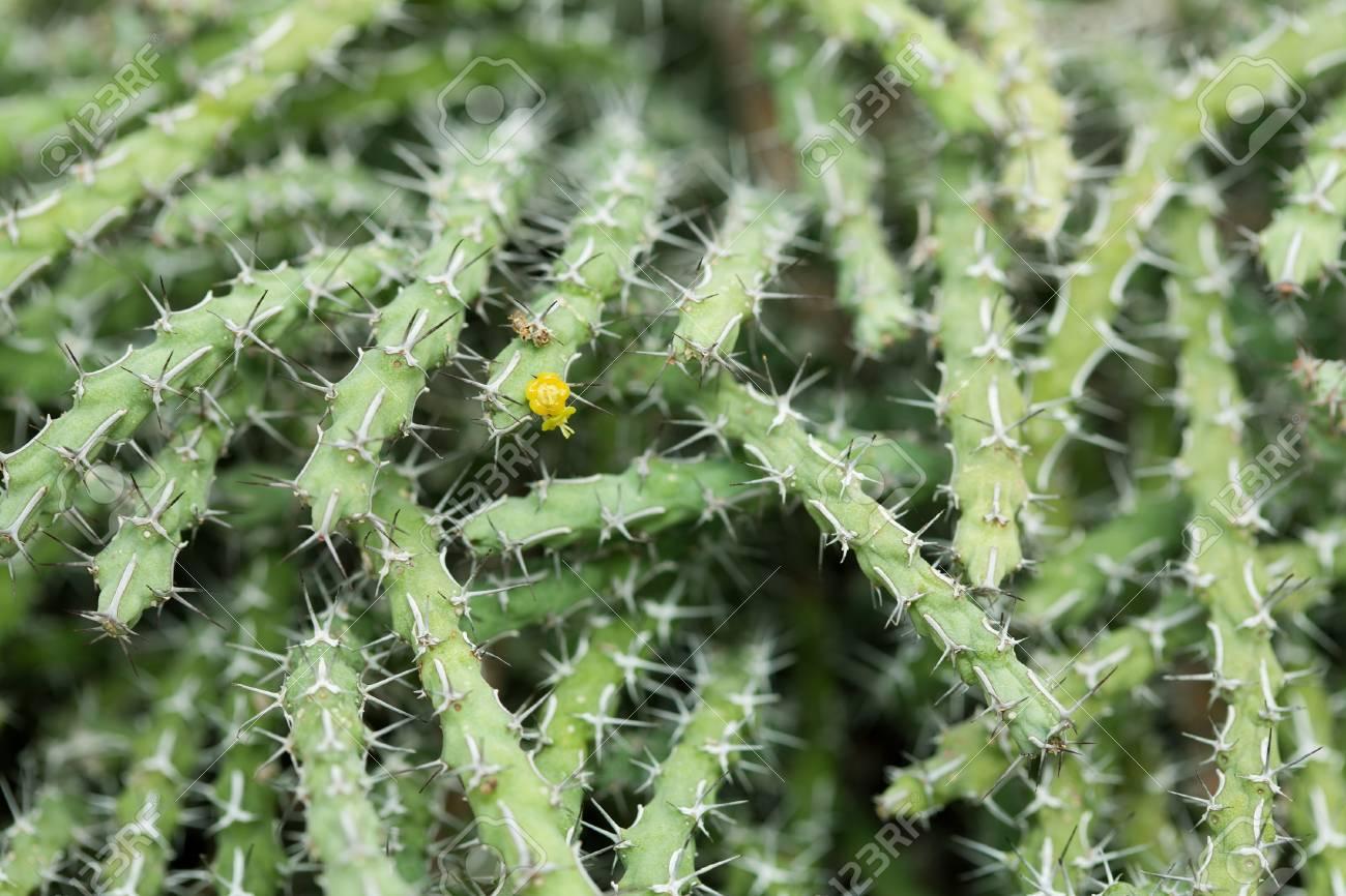 Cactus close-up Stock Photo - 13726449