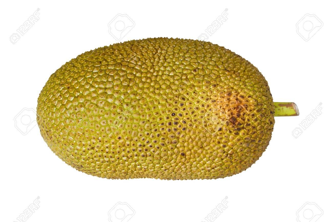 Jack fruit isolated on white background Stock Photo - 19293353