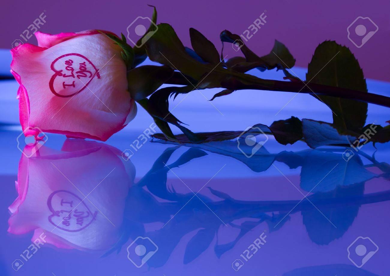 rose reflection love Stock Photo - 4603384