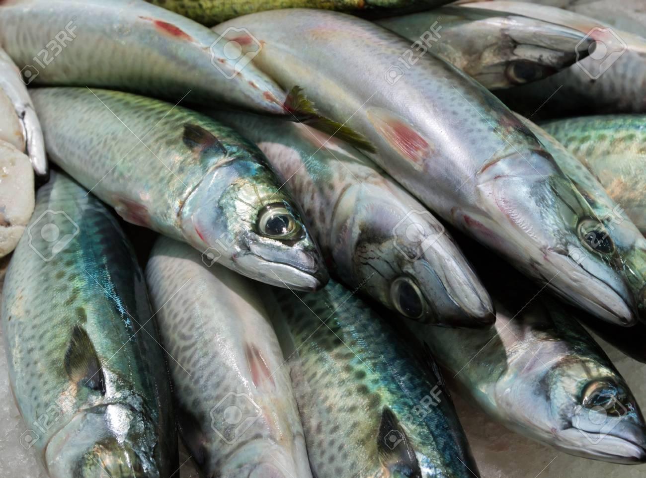 mackerel,sardines - sea food on ice background Stock Photo - 16712430