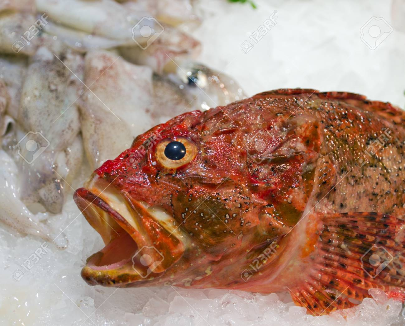 red fish sea food on ice background Stock Photo - 16712422