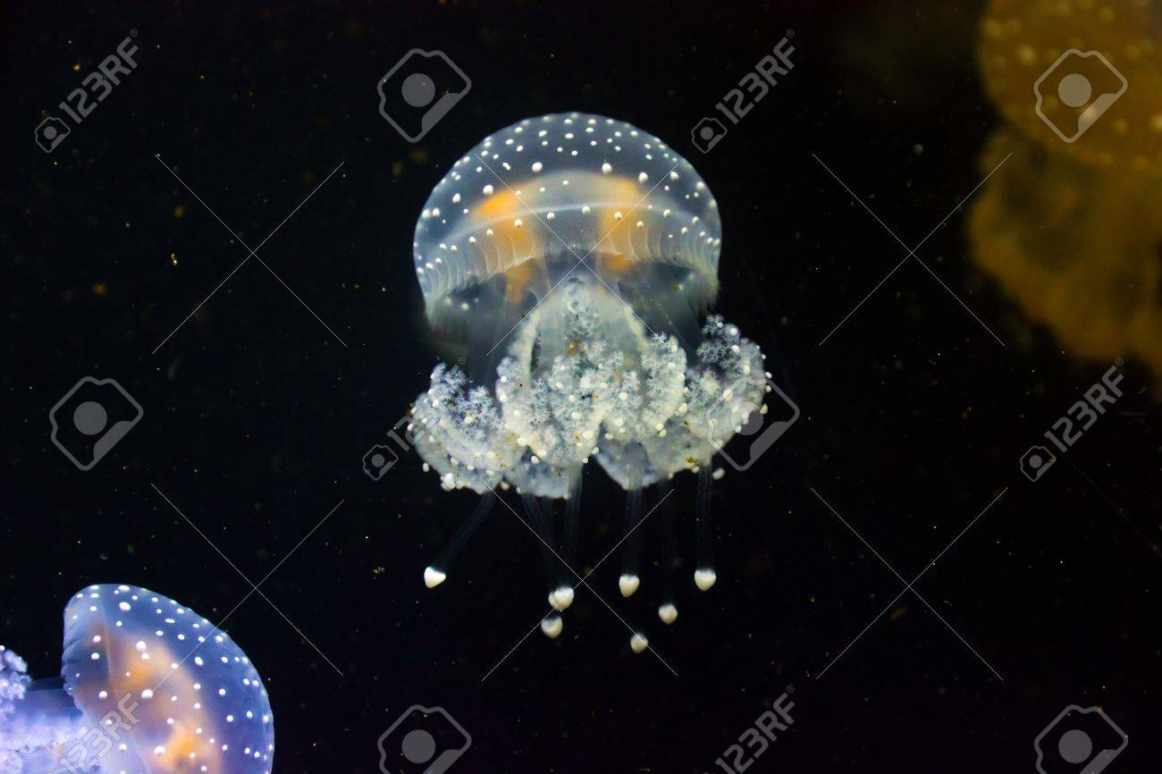 group jellyfish blue and color underwater Stock Photo - 17472258