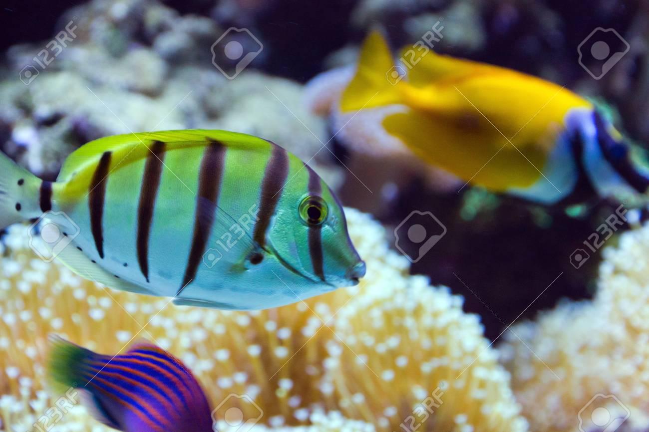 Tropical fish life in coral reef aquarium Stock Photo - 17630714