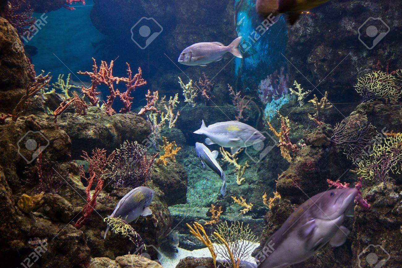 adventure color beauty fish life in sea Stock Photo - 18664338