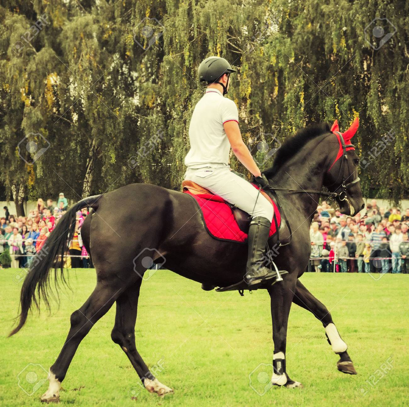 Portrait Of A Show Jumping Horse Galloping Between Two Jump Stock Photo Picture And Royalty Free Image Image 24364718