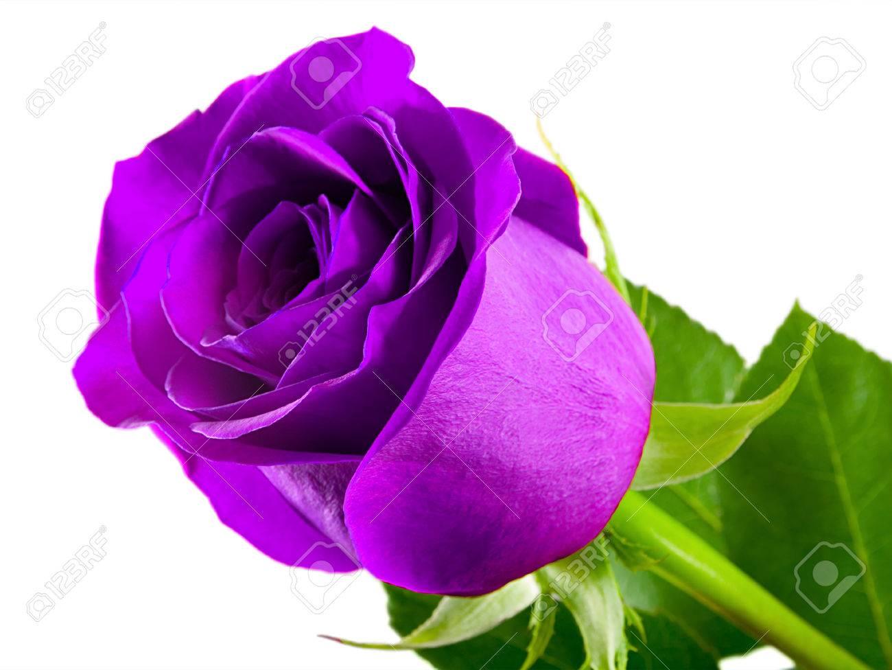 Violet Rose naked 243