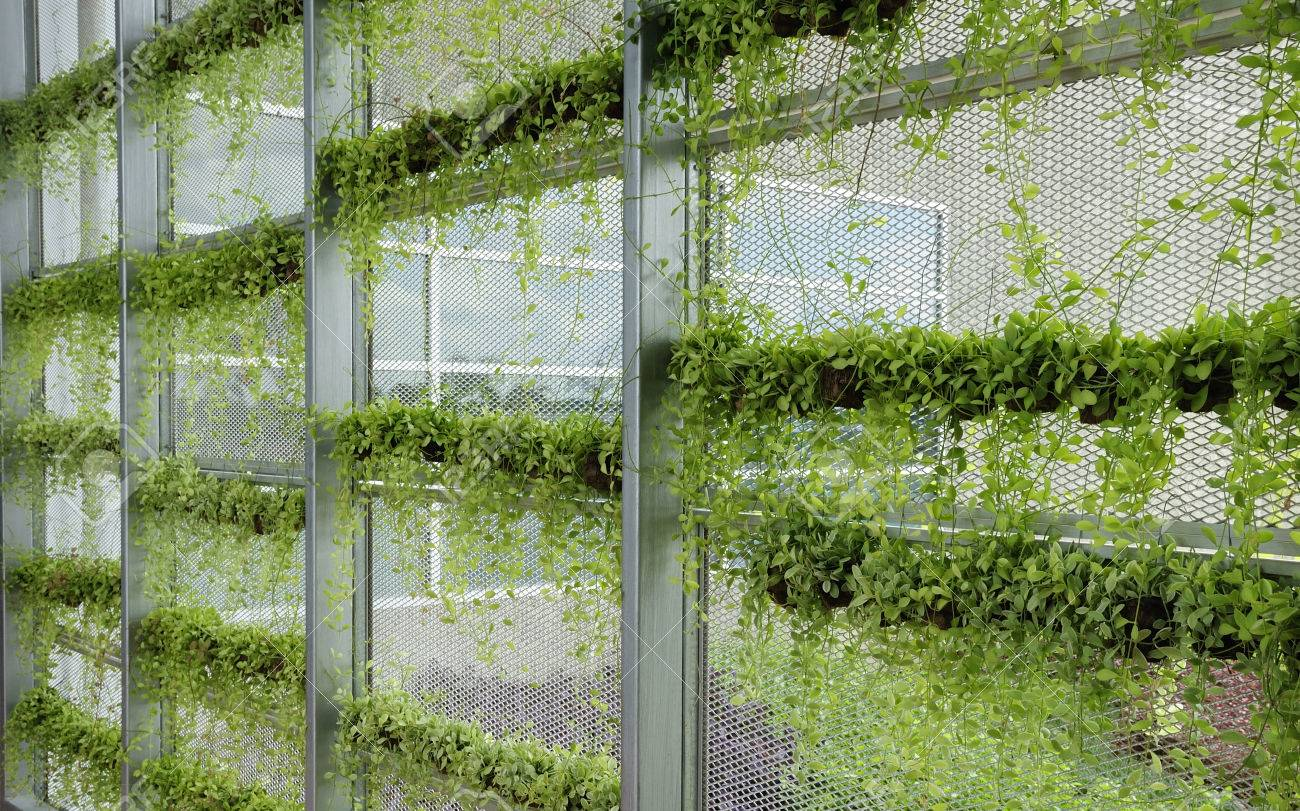 Wall With Rows Of Green Plants For Green Modern Office Building Stock Photo    22874415