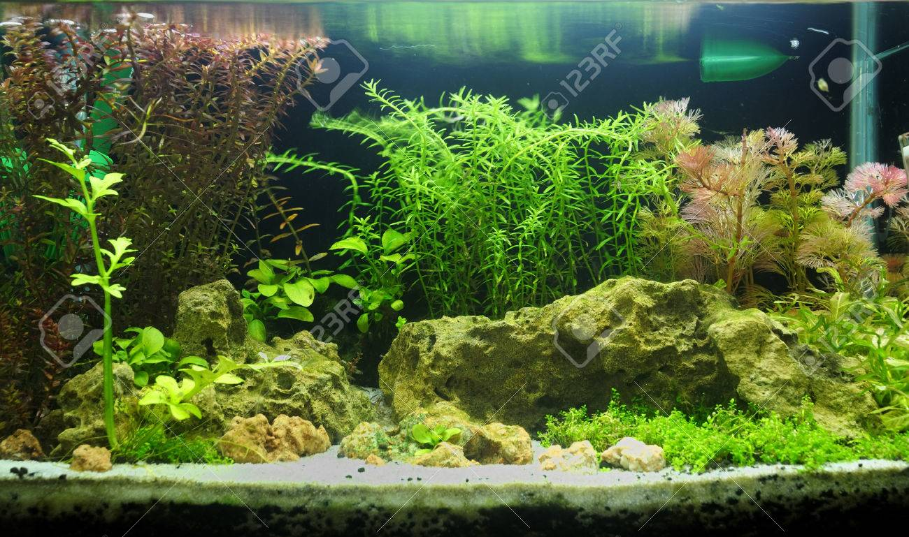 Aquascaping Of The Beautiful Planted Tropical Freshwater Aquarium Stock  Photo   23326986
