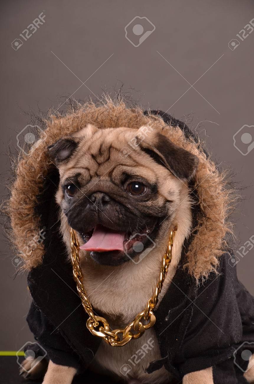 Αποτέλεσμα εικόνας για dog with golden necklace