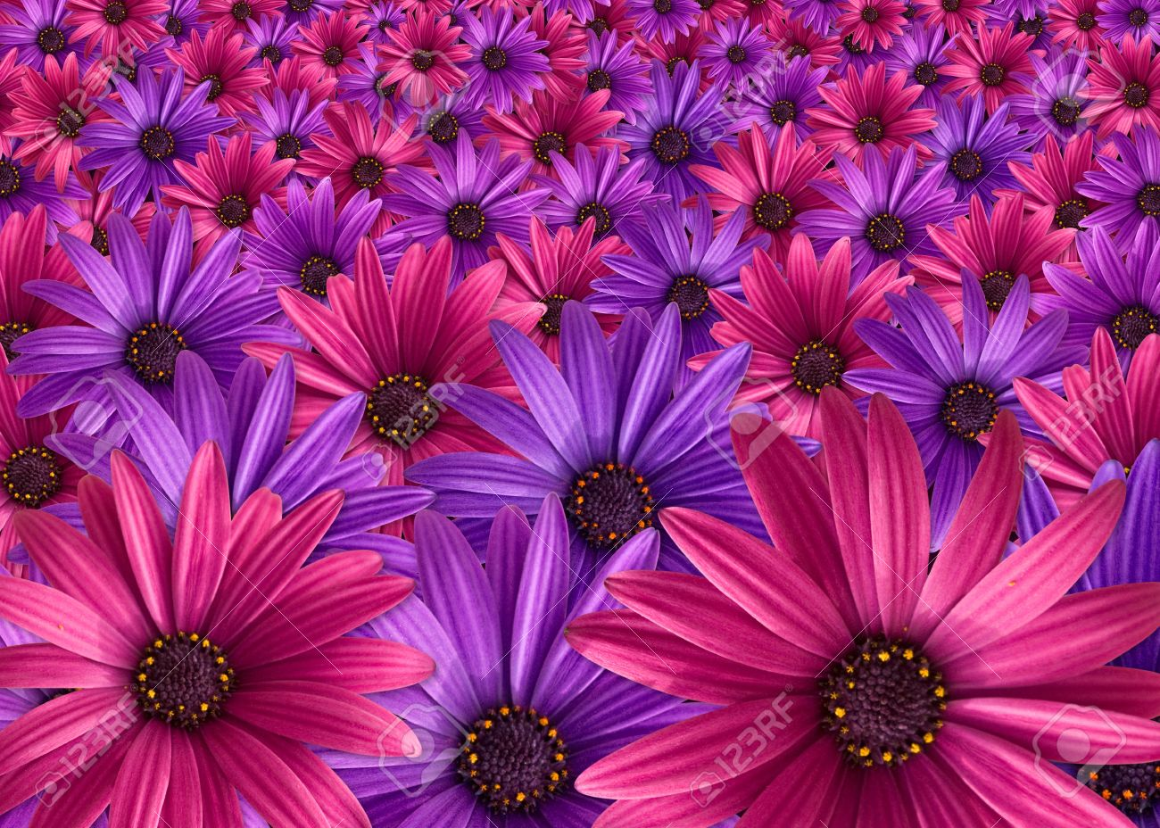 Pink and purple flowers background stock photo picture and royalty pink and purple flowers background mightylinksfo
