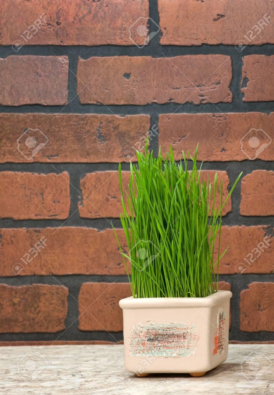 Bloempot met tarwe kiemen buurt bakstenen muur in de keuken ...