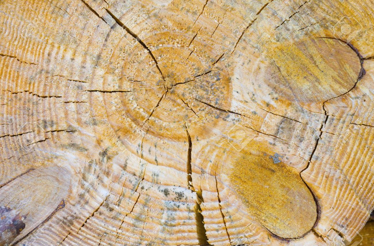 Close-up shot of wooden cut Stock Photo - 4809592