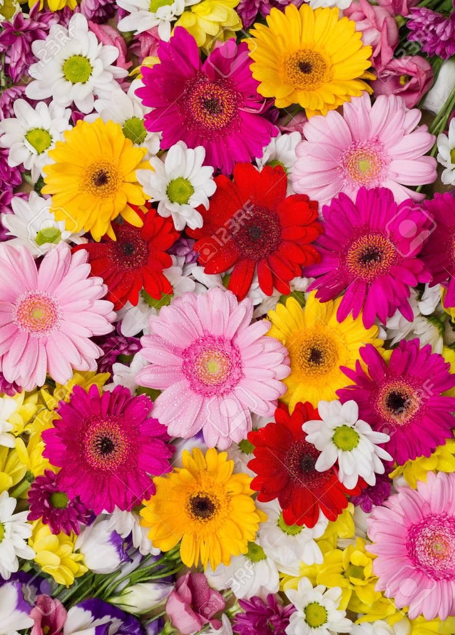 ガーベラと他の花は、白、黄色、赤、ピンクの花でカラフルな自然の背景画像として配置