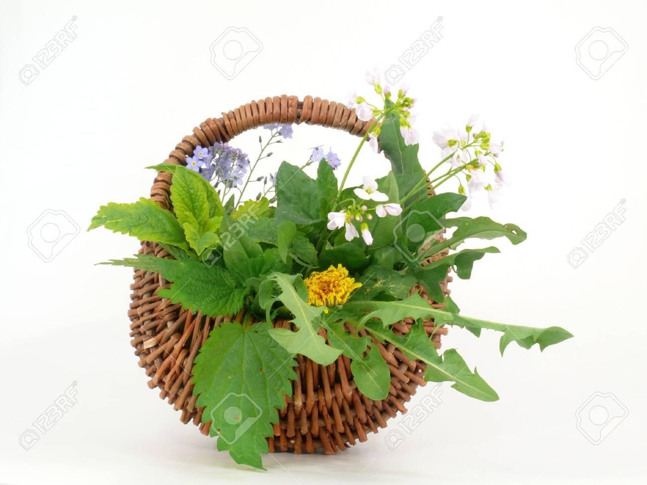 wild herbs - 9441519