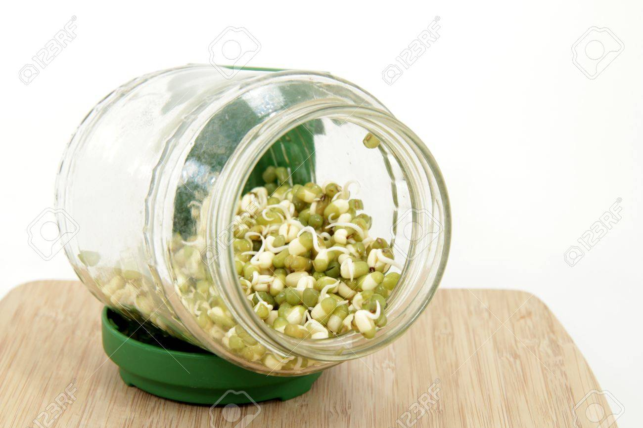 (Mung bean seedlings in the seed glass) Stock Photo - 12192415