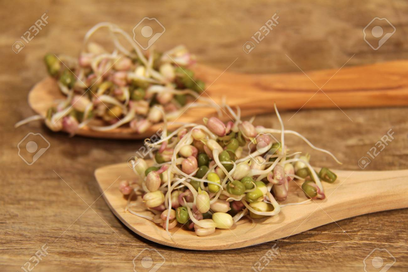 mungo bean germs on the wooden spoon Stock Photo - 12192394