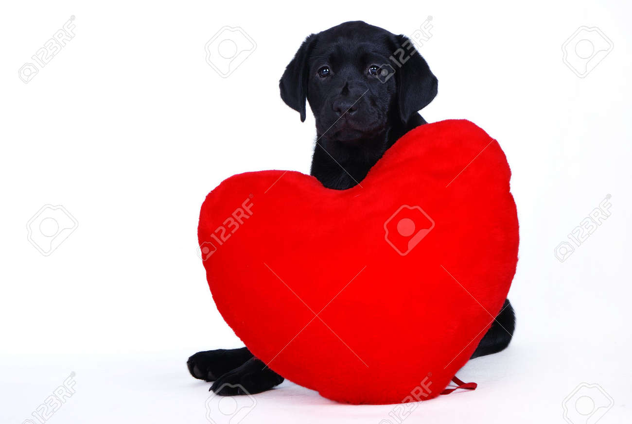 Puppy with heart Stock Photo - 733790