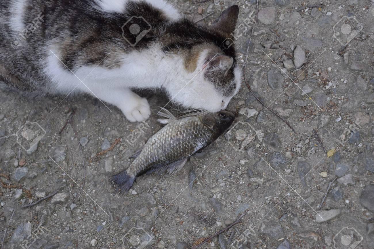 Fisch in der muschi