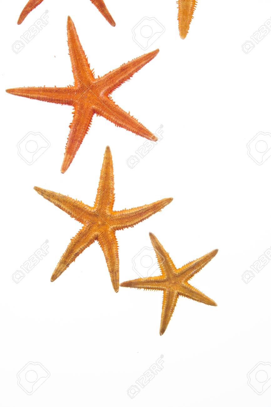 starfish Stock Photo - 10949773